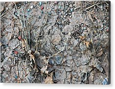 Acrylic Print featuring the photograph Winter's Mud by Allen Carroll
