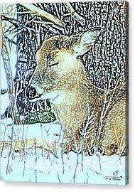 Winter's Nap Acrylic Print by Torie Tiffany