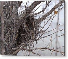 Winter's Nest Acrylic Print