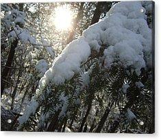 Winter's Paw Acrylic Print