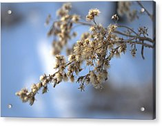Winter's Peace Acrylic Print