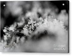 Winter's Peace Acrylic Print