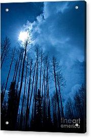 Winters Sky Acrylic Print by Dana Kern