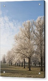Acrylic Print featuring the photograph Winter's Trees by David Isaacson