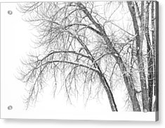 Winter's Weight Acrylic Print by Darren  White