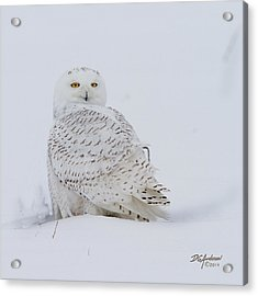 Winters White Acrylic Print