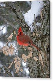 Winters Wonders Acrylic Print by Peggy  McDonald