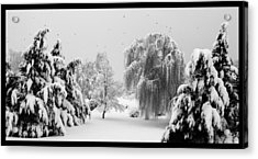 Wintery Scenes 1 Acrylic Print by David Lester