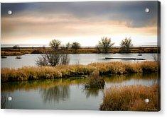 Acrylic Print featuring the photograph Wintery Wetlands by Jordan Blackstone