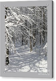 Wintery Woodland Shadows Acrylic Print