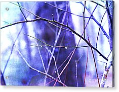 Wintry Acrylic Print by Judi Bagwell