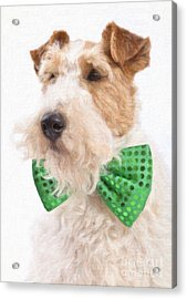 Wire Fox Terrier With Bowtie Acrylic Print