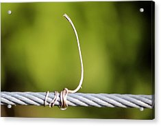 Wire On Wire Acrylic Print by Cynthia Guinn
