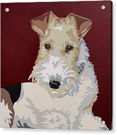 Wirehaired Fox Terrier Acrylic Print by Slade Roberts
