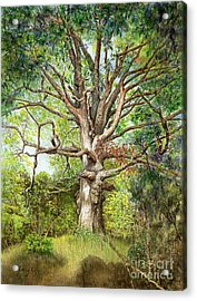 Acrylic Print featuring the painting Wisdom by Nancy Cupp