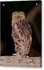 Wise Eyes.  Acrylic Print by Gary Bridger