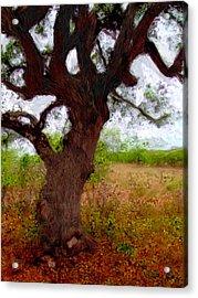 Da214 Wise Old Tree By Daniel Adams Acrylic Print
