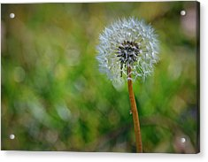 Wish And A Dream Acrylic Print by Mary Zeman