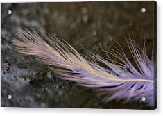 Wish Upon A Feather Acrylic Print