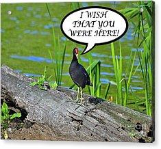 Wish You Were Here Moorhen Card Acrylic Print