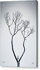 Wishbone Tree Acrylic Print