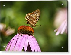 Wished For Pink Acrylic Print by Christina Rollo