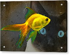 Wishful Thinking - Cat And Fish Art By Sharon Cummings Acrylic Print by Sharon Cummings