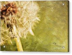 Wishful Thinking Acrylic Print by Lois Bryan