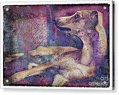 Wishing And Hoping Acrylic Print by Danilo Piccioni