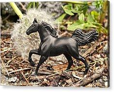 Wishing Horse Acrylic Print by Jeff  Gettis
