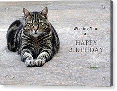 Wishing You A Happy Birthday Tabby Acrylic Print by Michele Wright