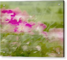 Acrylic Print featuring the photograph Wisp by Linde Townsend
