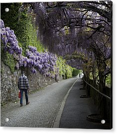 Wisteria And Plaid Acrylic Print by Colleen Williams