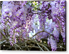 Acrylic Print featuring the photograph Wisteria Dream by Cathy Dee Janes