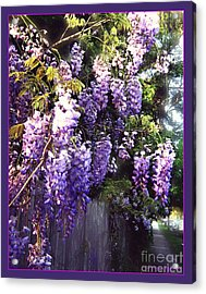 Acrylic Print featuring the photograph Wisteria Dreaming by Leanne Seymour