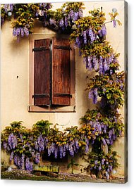 Wisteria Encircling Shutters In Riquewihr France Acrylic Print by Greg Matchick