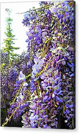 Acrylic Print featuring the photograph Wisteria - Fun Version 2 by Jodie Marie Anne Richardson Traugott          aka jm-ART