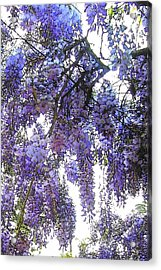 Acrylic Print featuring the photograph Wisteria - Fun Version 3 by Jodie Marie Anne Richardson Traugott          aka jm-ART