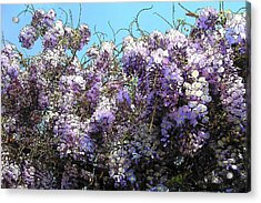 Acrylic Print featuring the photograph Wisteria - Fun Version by Jodie Marie Anne Richardson Traugott          aka jm-ART