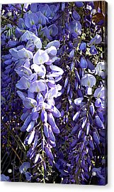 Acrylic Print featuring the photograph Wisteria II by Jodie Marie Anne Richardson Traugott          aka jm-ART