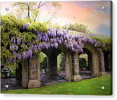 Wisteria In May Acrylic Print by Jessica Jenney
