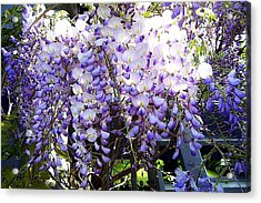 Acrylic Print featuring the photograph Wisteria by Jodie Marie Anne Richardson Traugott          aka jm-ART