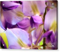 Acrylic Print featuring the photograph Wisteria Kisses by Roxy Riou