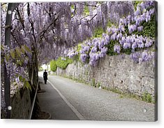 Wisteria Lane Acrylic Print by Colleen Williams
