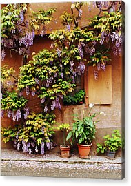 Wisteria On Home In Zellenberg 4 Acrylic Print by Greg Matchick