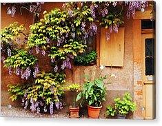 Wisteria On Home In Zellenberg France Acrylic Print by Greg Matchick