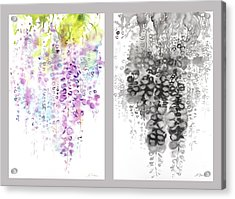 Wisteria Acrylic Print by Sumiyo Toribe