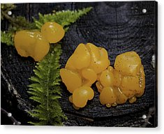 Acrylic Print featuring the photograph Witches Butter by Betty Depee