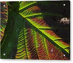 Witchhobble Leaf Detail Acrylic Print