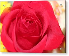 Acrylic Print featuring the photograph With Love by Judy Palkimas